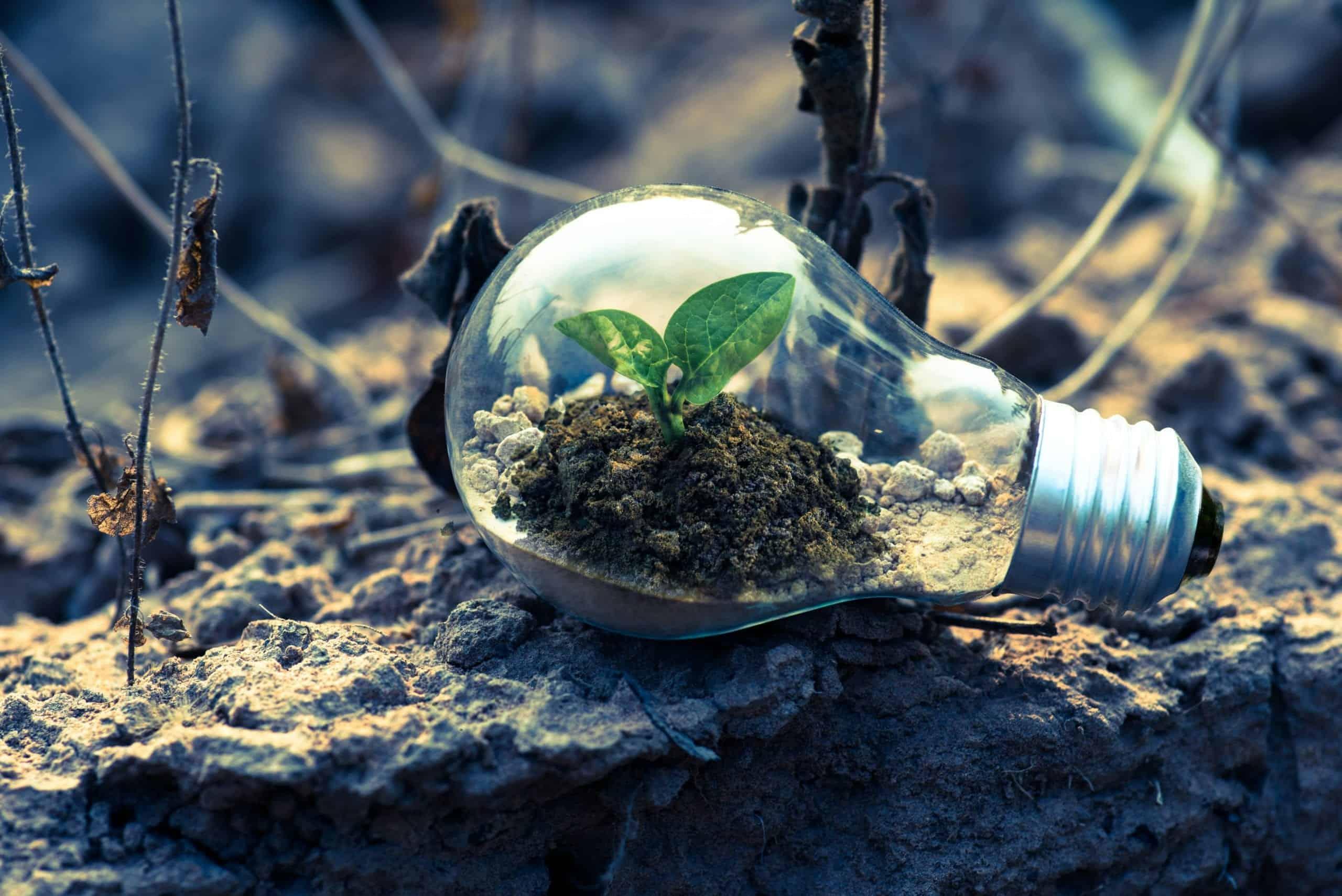 Our Low Carbon Future