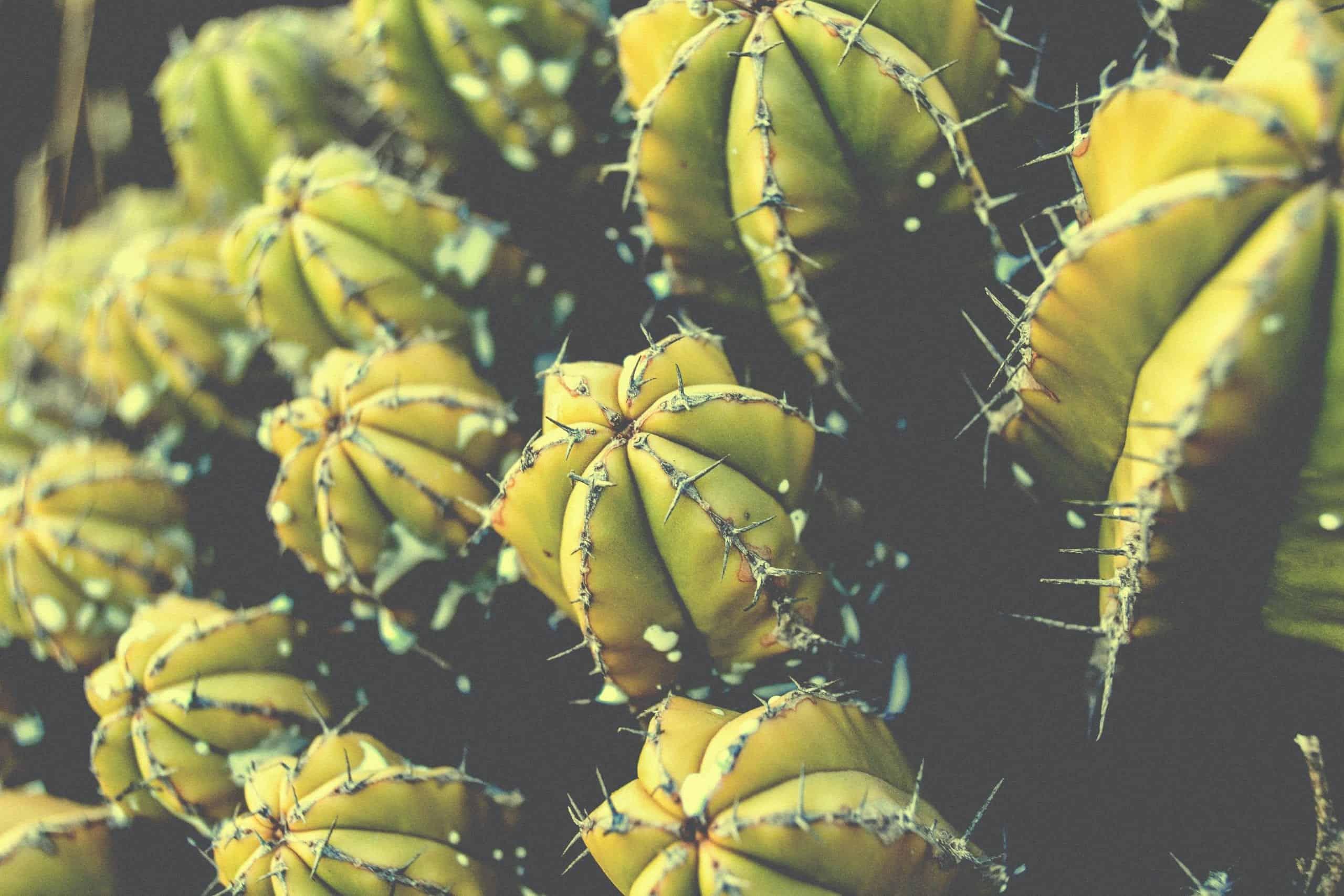 Cactus Energy