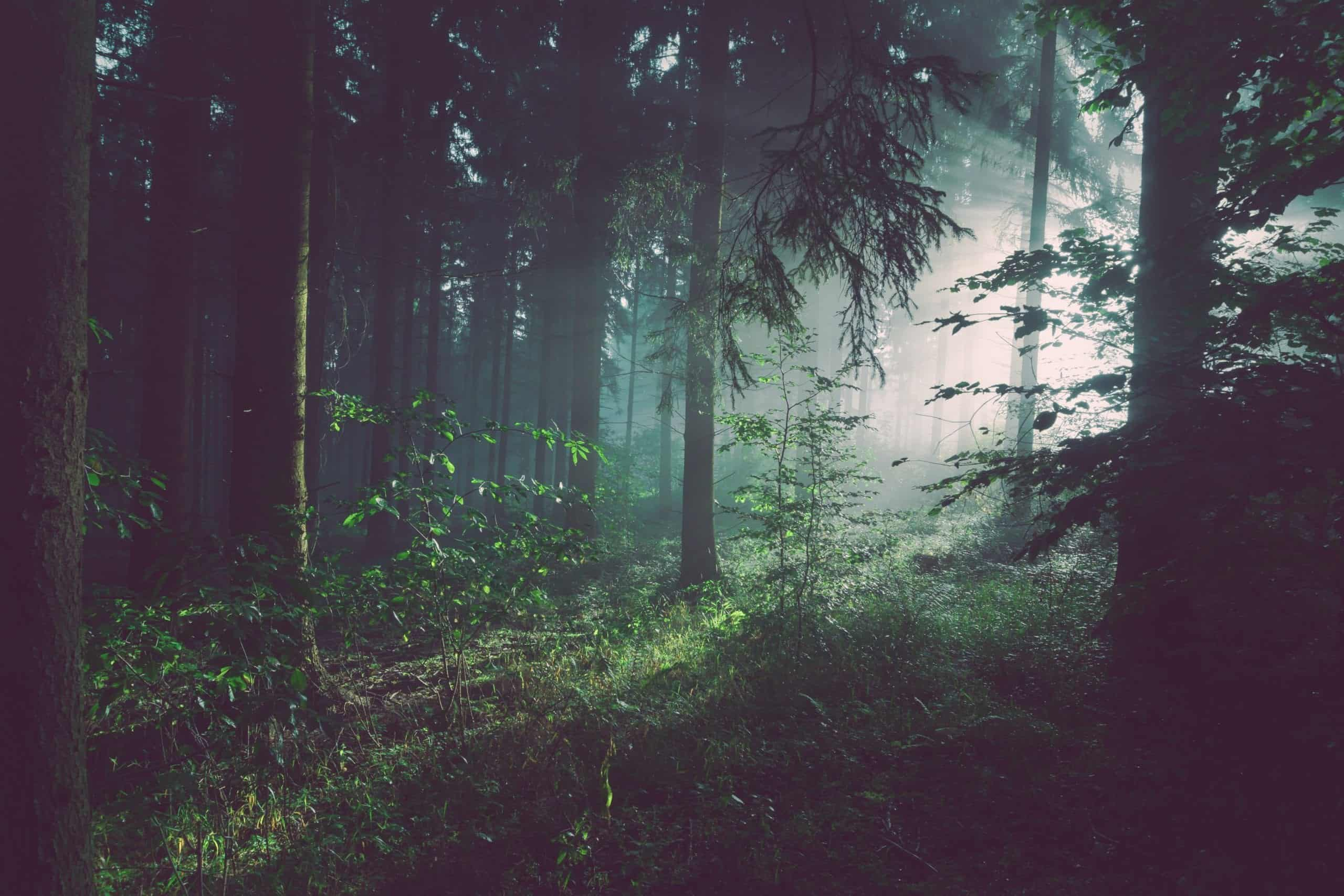 Why Are We Helping to Create Tomorrow's Forests?