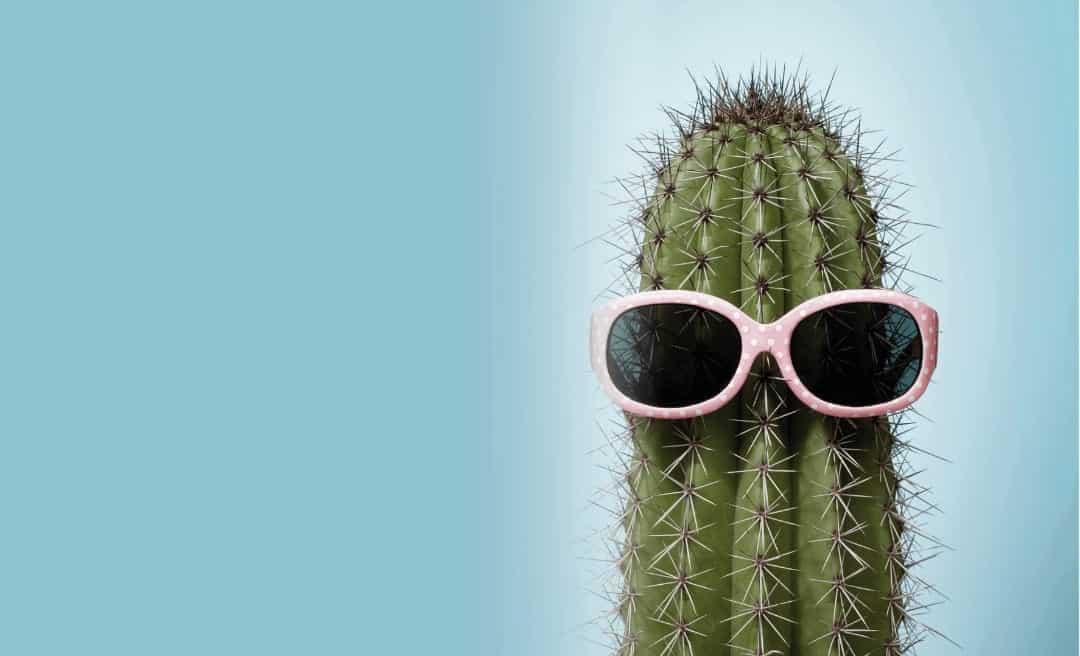 Celebrating 2 Years of Cactus Energy!