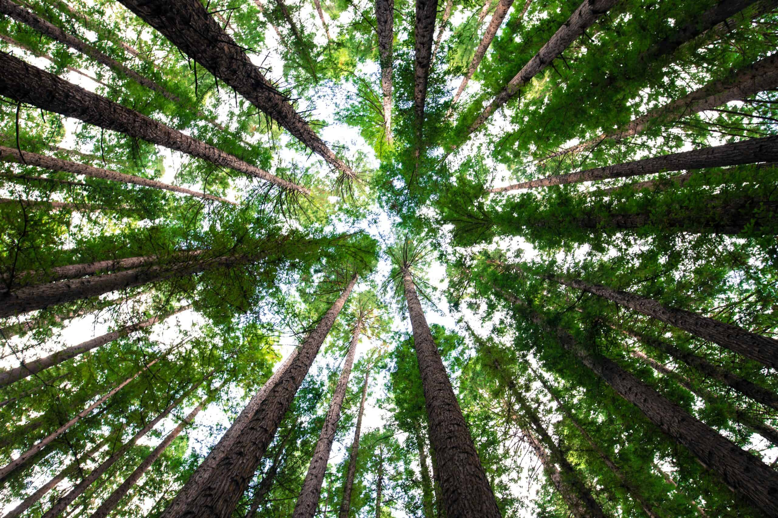 Carbon Footprint and Trees